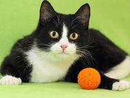 Симона, талантливая веселая кошка 9-10 мес Кошечка Симона (9-10 мес. ) была подо