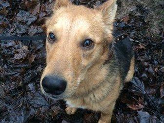 Просмотреть фото Продажа собак, щенков Малыш Арчи ждет добрые руки и теплый дом! 34345012 в Гатчине