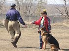 Скачать изображение Услуги для животных Дрессировка собак, 33421601 в Хабаровске