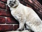 Просмотреть изображение  Котик ищет подружку! 33790654 в Хабаровске