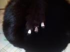 Увидеть фотографию Женская одежда Шапка из песца 37686807 в Хабаровске