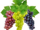 Увидеть фотографию  Саженцы винограда светлых, темных сортов, черенки винограда, 38622831 в Комсомольске-на-Амуре
