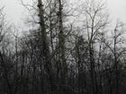 Свежее фотографию Другие строительные услуги Спил, валка и кронирование деревьев 67712711 в Хабаровске