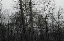 Спил, валка и кронирование деревьев