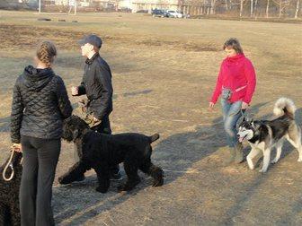 Скачать фото Услуги для животных Дрессировка собак, 33421601 в Хабаровске
