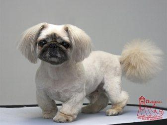Смотреть foto  Стрижка собак и кошек в Хабаровске 33987370 в Хабаровске