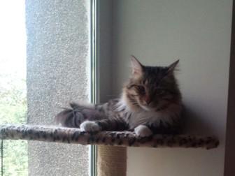 Уникальное фото Приюты для животных Отдам кота в добрые руки 39405784 в Хабаровске