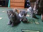 Фото в Отдам даром - Приму в дар Отдам даром Отдам в хорошие руки красивых, ласковых котят в Ханты-Мансийске 10