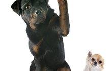 Кинолог, Дрессировка собак