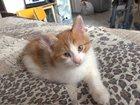 Смотреть изображение Отдам даром Отдам котенка даром в хорошие руки 33645357 в Щёлкино