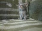 Фотография в   три котенка ищут себе хозяев, две девочки в Иваново 0