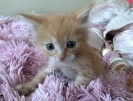 Отдадим в добрые руки маленького котенка Отдадим в добрые руки маленького котенк