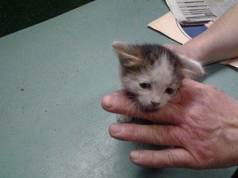 Свежее foto Отдам даром - приму в дар Отдам котят в хорошие руки! 32716212 в Иваново