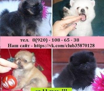 Фотография в Собаки и щенки Продажа собак, щенков В продаже чистокровные и не чистокровные в Иваново 0