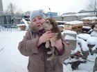 Фотография в Собаки и щенки Продажа собак, щенков На предприятии в будке живут 9 щенков с мамкой. в Ижевске 0