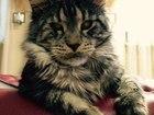 Фото в Потерянные и Найденные Потерянные с 8 апреля ищем кота, просим помочь вернуть в Ижевске 0
