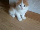 Фотография в Отдам даром - Приму в дар Отдам даром Отдам в добрые руки 2-х котят: мальчика и в Ижевске 0