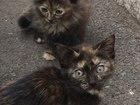 Увидеть фото Отдам даром Пестрые котята в добрые руки, 36756676 в Ижевске