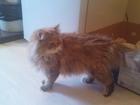 Фото в   4 милых, маленьких котенка, приученные к в Ялта 0