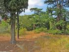 Земельный участок в Отрадном (Магарач) 42 сотки. Участок ров