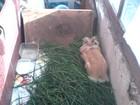 Скачать бесплатно фото Отдам даром - приму в дар даром отдам кролика 33608782 в Ярославле