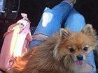 Изображение в Собаки и щенки Продажа собак, щенков ПОМОГИТЕ ПОЖАЛУЙСТА! ! ! ! !   Никак не можем в Ярославле 0