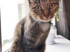 Смотреть фото Потерялись животные Кошечка ищет дом и заботливых хозяев! 68137361 в Ярославле