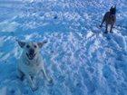 Скачать бесплатно фотографию Услуги для животных Передержка собак Электросталь, Ногинск 32361653 в Электростали