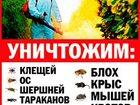 Просмотреть фото  Уничтожение-выведение-травля клопов в Ногинске,Электростали 34007174 в Электростали