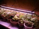 Скачать бесплатно фотографию  Системы светодиодного Фито освещения для растений 37617854 в Екатеринбурге