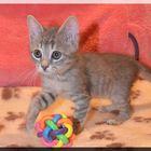 Маленький шустренький котенок Филя