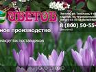 Изображение в Рыбки (Аквариумистика) Растения Осуществим доставку цветов в любую точку в Энгельсе 0