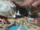Фото в   Отдам котят в добрые руки. Едят сами. в Юрге 10