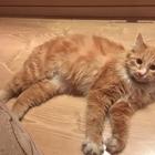 Найден рыжий котик на Пуркаева 51