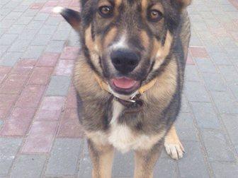 Скачать foto Отдам даром Обаятельный щенок-подросток ищет семью 33051618 в Калининграде