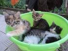 Фотография в   отдам котят в добрые руки. в Калининске 0