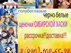 Фотография в Собаки и щенки Продажа собак, щенков Черно-белые и белоснежные малыши хаски! По в Калуге 0