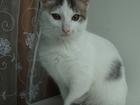 Смотреть foto Отдам даром - приму в дар Отдам котят в хорошие руки 52873512 в Калуге