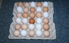 Куриное домашнее яйцо в наличии