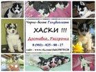 Фото в Собаки и щенки Продажа собак, щенков Хаски щеночков яркого черно-белого окраса в Казани 0