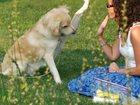 Уникальное изображение Разное Дрессировка собак в Заинске 34333863 в Казани
