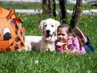 Изображение в Домашние животные Разное Поведение и психология собак – консультации в Казани 900