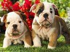 Смотреть фотографию  Гостиница для собак 35093409 в Набережных Челнах
