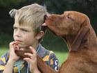Свежее изображение  Дрессировка собак в г, Набережные Челны 39124754 в Набережных Челнах
