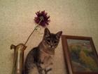 Смотреть foto Вязка кошек Кошка Муся ищет кота для первой встречи, 67657786 в Казани