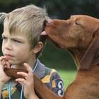 Дрессировка собак в г, Набережные Челны
