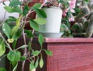 Комнатные растения отдаем в добрые руки комнатные растения из наших офисов. на ф