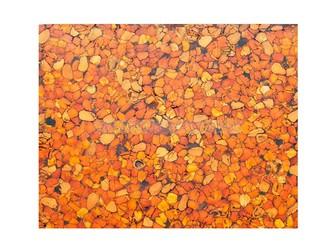 Увидеть foto Другие предметы интерьера Эко Плитка из кедропласта, Для отделки помещений 36874702 в Кемерово