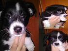 Фотография в Собаки и щенки Продажа собак, щенков Срочно! ! Малишкам (троим) 2 месяца. Имеют в Киеве 0