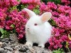Скачать бесплатно фото Грызуны продаются крольчата карликовый вислоухий баран 33075386 в Москве